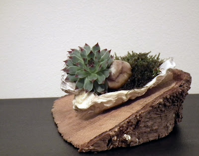 Oyster shell with succulent plants on a piece of wood
