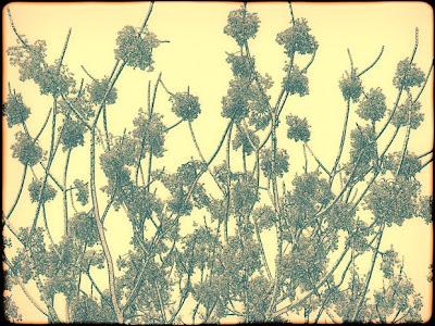 art166, digital, contemporary, mimosa, dawn
