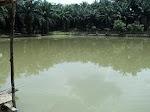 kolam harian gong 2000