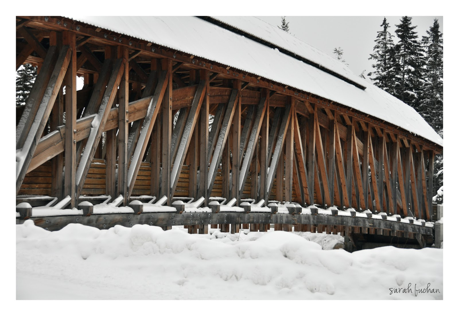A shutter bug golden bc timber frame bridge for Timber frame bridge