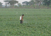 Petani Menyemprotkan Pupuk dan Pestisida