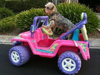 Dog on pink Jeep