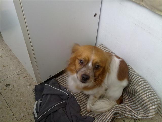inocente perra pequeño en La Coruña