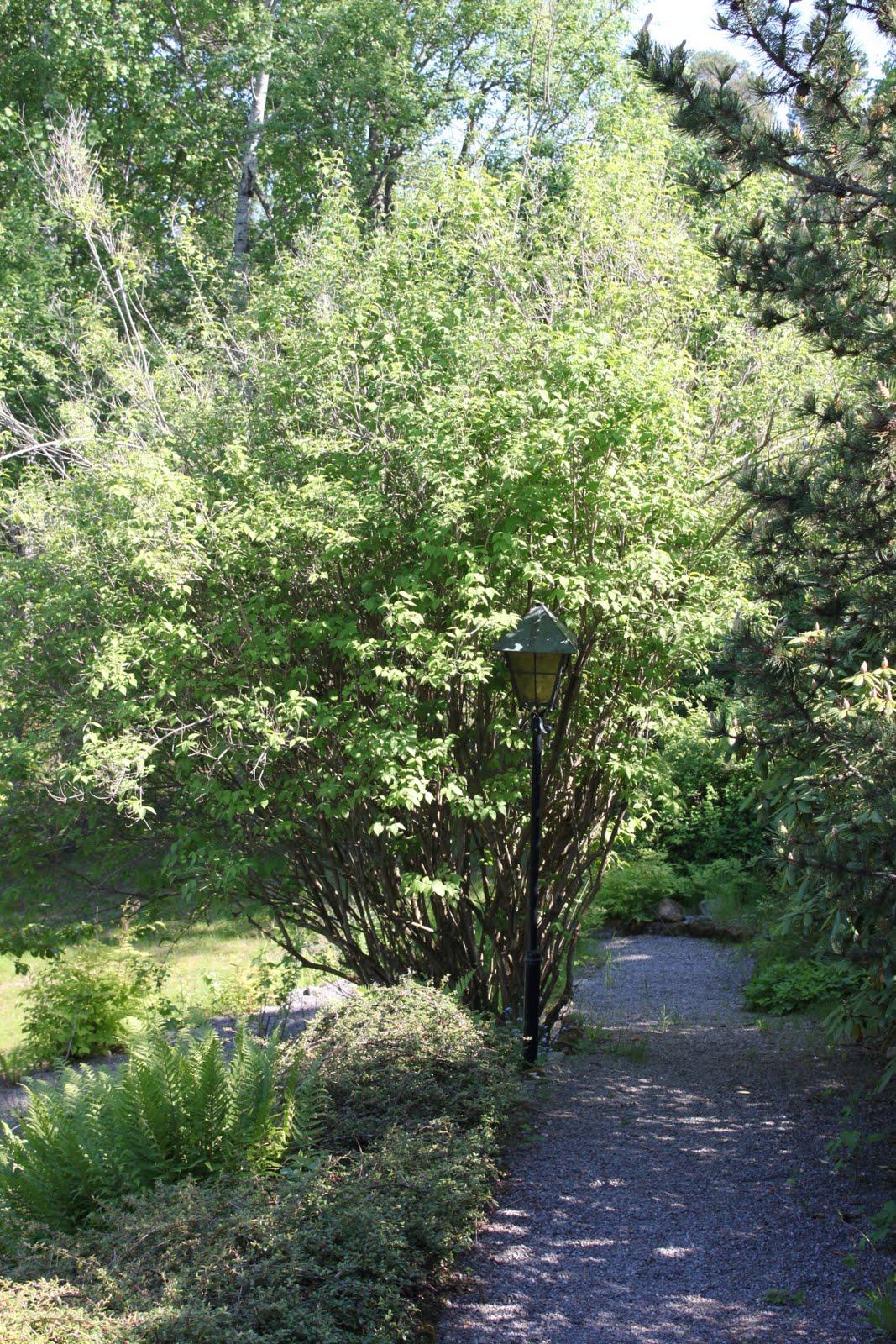 höga buskar trädgård