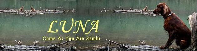 COME AS YOU ARE ZAMBI -IRISH RED SETTER