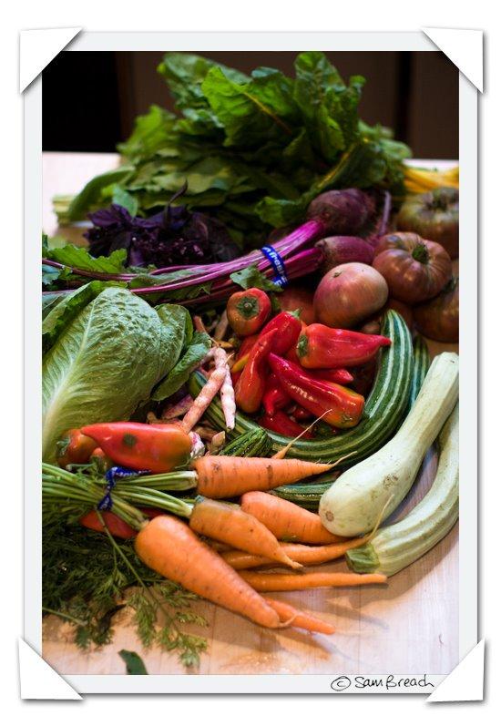 picture photograph image picked up at piccino 2008 copyright of sam breach http://becksposhnosh.blogspot.com/