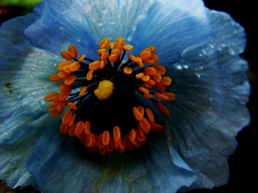 Shimla Gallimaufry Pleasures Are Like Poppies Spread You Seize The
