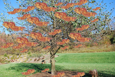 bacon tree lol