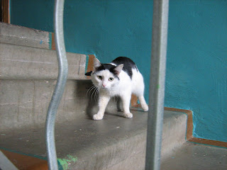 Porched Black and White Kitty