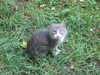 Neighbor Smoky Old Cat