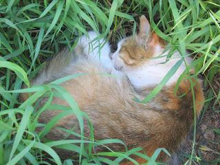 Beggar Grass Kitty