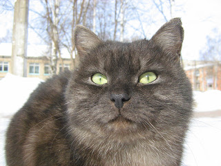 Green-Eyed Tabby Fat-Cat