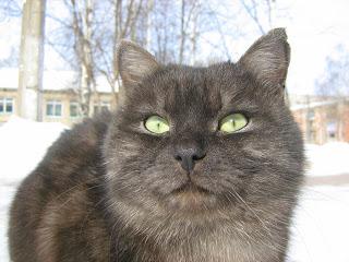 Green-Eyed Tabby Fat-Cat