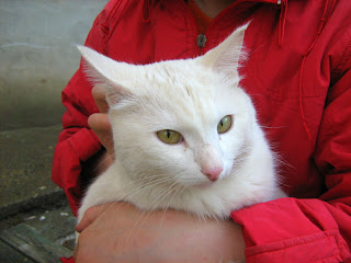 """Young White Cat """"Snowball"""": Part Two"""