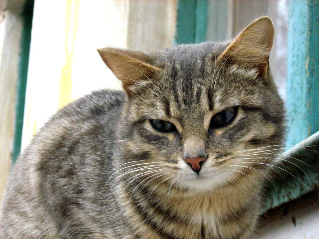 2007 arctic cat 500