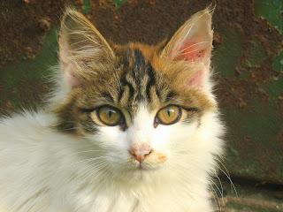 She-Homeless Kitten