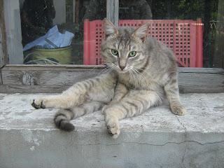 Cleanly Smokey Cat