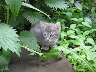 "Young Smoky Kitten in ""Catofamily: Part One"""