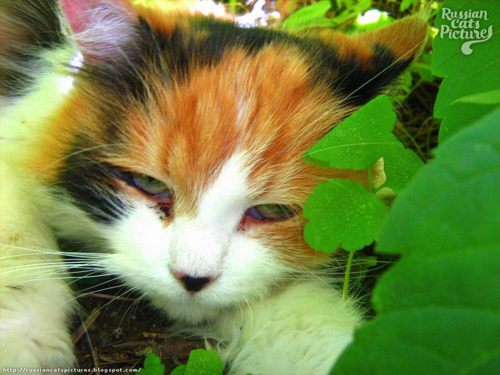 Green-Eyed Black Tortie with White Hyper-Tender Kitty