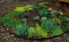 Sedum bed