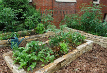 Productive raised beds