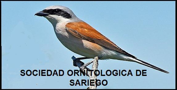 SOCIEDAD ORNITOLOGICA DE SARIEGO