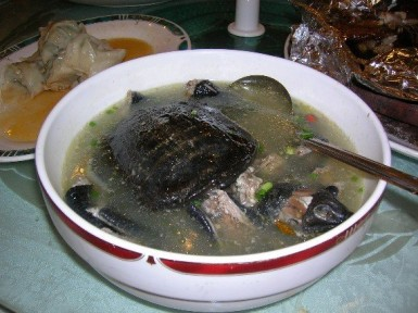 Cooked turtle soup