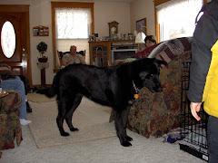 Abby the Big Dog!