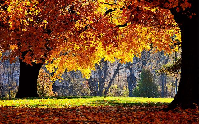 Herfst achtergrond in oranje met geel
