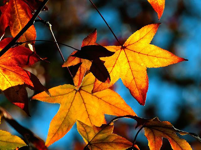 Oranje gele bladeren aan een tak