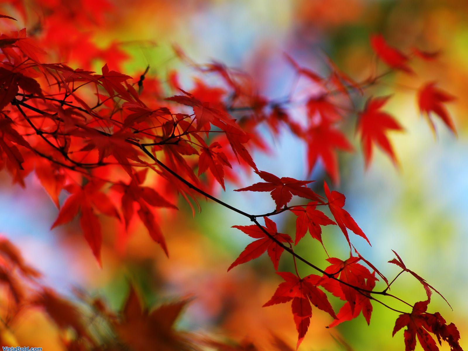 http://2.bp.blogspot.com/_RAlP3BmEW1Q/TQNis14ITDI/AAAAAAAABNo/T6OYH5Ai-TA/s1600/Herfst-achtergronden-herfst-wallpapers-21.jpg