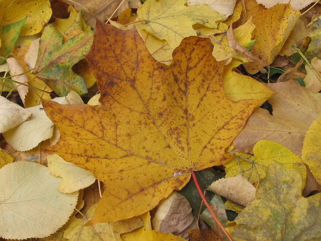 Herfst wallpaper met afgevallen bladeren