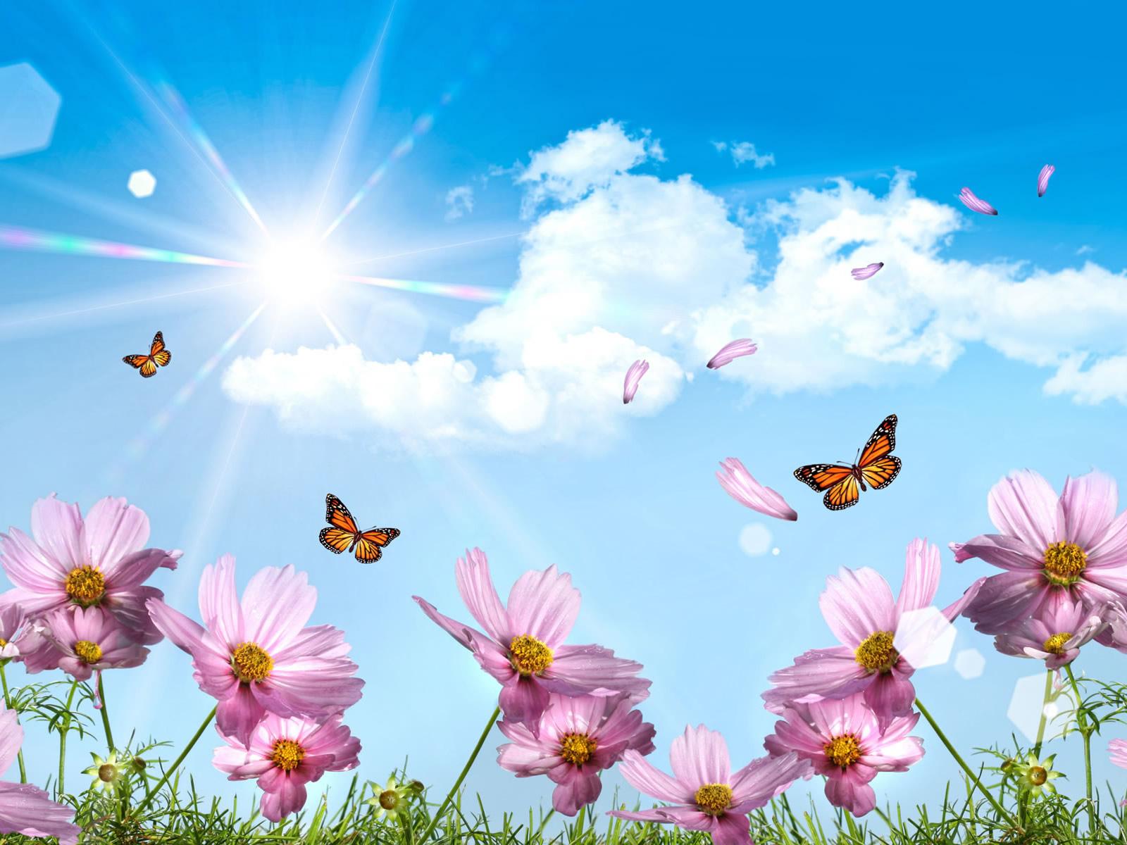 Vlinders bloemen en zon bureaublad achtergrond blauw