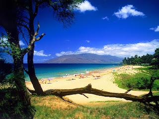 Afbeelding met strand