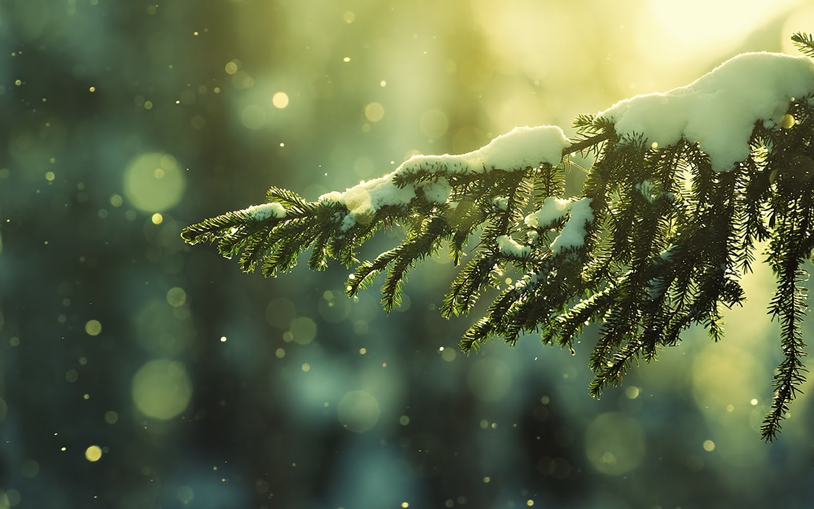 Winter Christmas Wallpaper With Leafs Of A Pinetree Covered Snow