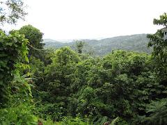 Vista del Yunque