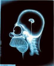 Neurocience's curiosity (seção mensal) Guilherme Lage