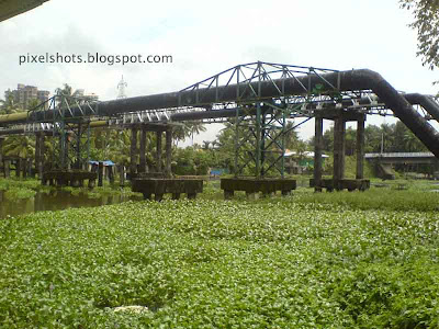 water-hyacinths-covering-kerala-river,worst-aquatic-plants,kula-vazha,river-of-kerala-filled-with-water-hyacinth-weeds