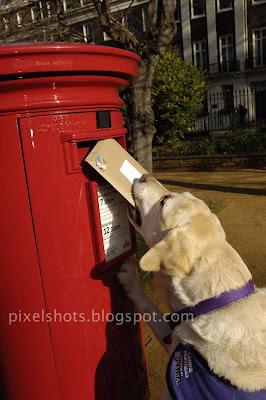 dog posting letter,amazing famous dog endal posting a letter photographed media,trained pets,intelligent pet dogs
