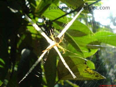 spider-web,spiders,spider in the web closeup digital photograph taken with cell phone in macro focus mode,masterpiece,photos,fresh,insect photos,spider and web macro picture,cellphone photography,cool-camera-photos,insect-photography,pixelshots-macros