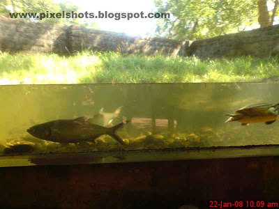 aquarium fishes in the fish tank of crocodile bank in tamilnadu india, crocodile bank aquarium fishes