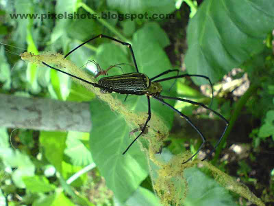 big spider in web digital photograph from kerala