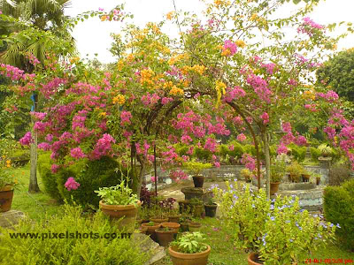 flowers in the garden plants of hill palace of ernakulam kerala