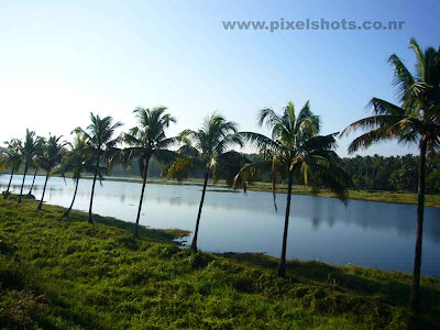 landscape scenery kerala photograph,coconut trees besides beautiful lake photographed during a train journey through kerala,kerala-lakes