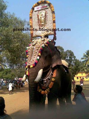 trained asian elephant,vishnusankar kerala,kerla elephant,vishnu elephant,indian elephant photo