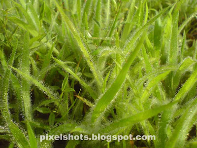 closeup photograph of morning fresh green grass leafs soaked in mist,nature photography