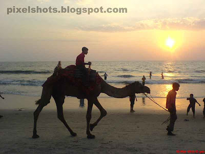 beach sunset photographs and man riding camel through beach in sunsets,camel,sunset,beach sunset,kerala beaches,scenic beach sunsets,beaches