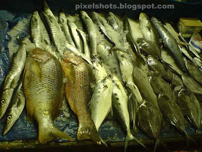 fishes in fish market of kerala cochin,cochin fish market,ayla,mathy,chaala,parava,chura,aavoly,karimeen,kili meen,poomeen,netholy,kozhuva,fishes for sale in fort cochin,pomfrets,sardines,Indian Mackerel,kerala fishes,avoly,meen,ribbon fish,ocean fishes,sea foods market,kerala fish market photos