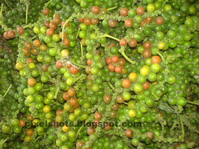 pepper photograph taken after harvest,photo of green and red ripe pepper seeds collected for processing,pepper the king of spices from kerala, kurumulaku, nanya vilakal, green pepper, kerala pepper, green chilly pepper