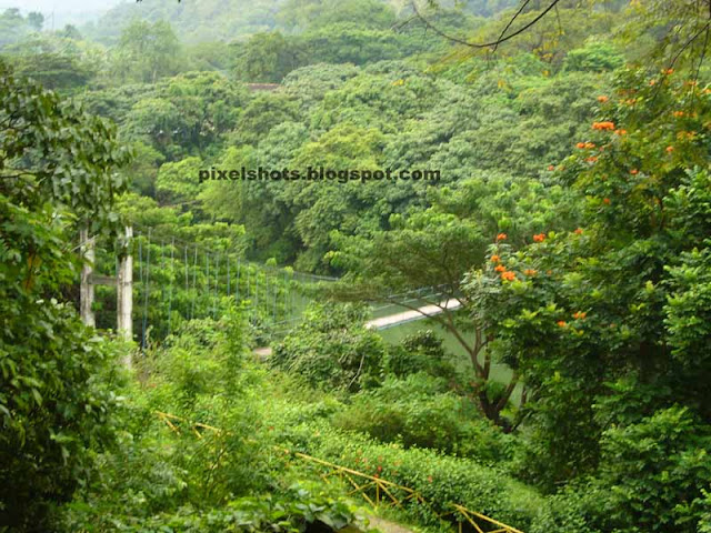 thenmala photos,western ghat forest trees from thenmala sculpture park,sway or hanging bridge of thenmala viewed from sculpture garden of thenmala eco tourism leisure zone